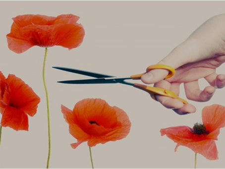 A Cautionary Tale for Tall Poppies and Women Leaders