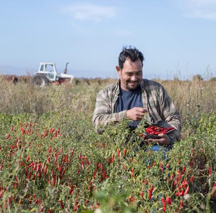 The Food Change: Organic & Beyond