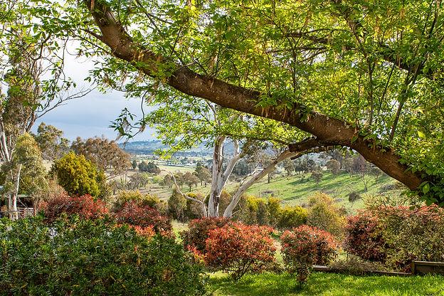 _D759525_211001_Backyard Looking Southwest.JPG