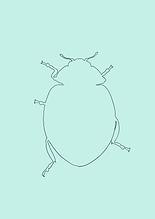Käfer NEU-6.PNG