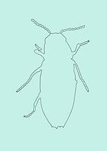 Käfer NEU-8.PNG