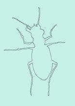 Käfer NEU-4.PNG