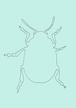 Käfer NEU-5.PNG