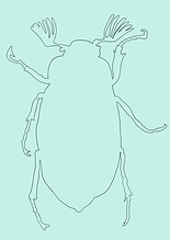 Käfer NEU-2.PNG