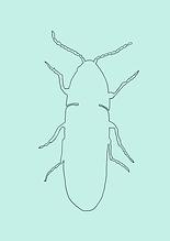 Käfer NEU-3.PNG