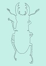 Käfer NEU-9.PNG