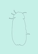 Käfer NEU-1.PNG