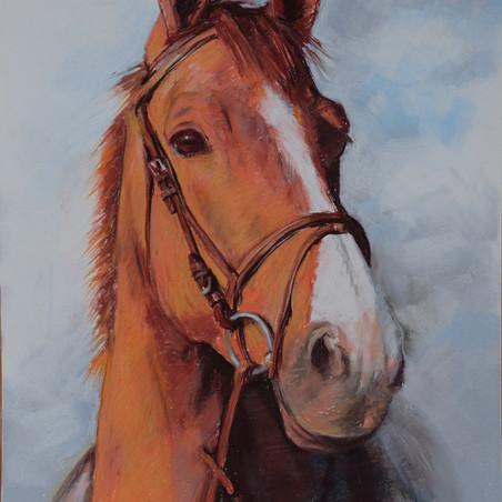 Pferd Skizze in Pastell von Alex van de Hoef