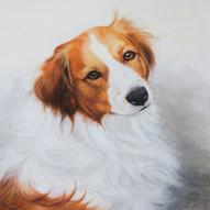 Hund Porträt in Pastell von Alex van de Hoef