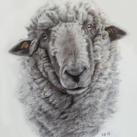 Schaf in Pastell von Alex van de Hoef