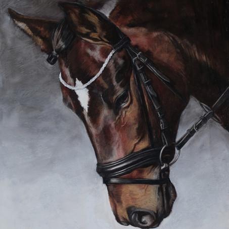 Pferd Porträt in Pastell von Alex van de Hoef