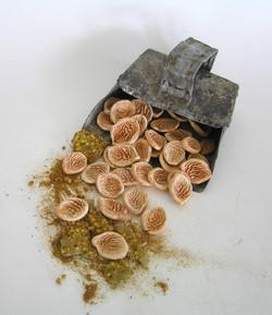 Prunus seed