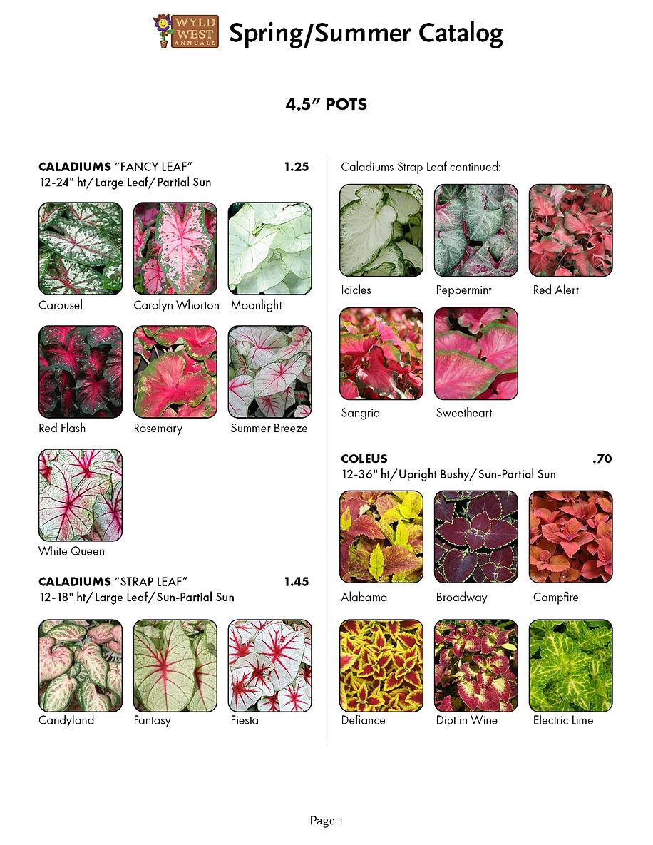 spring catalog 20202.png