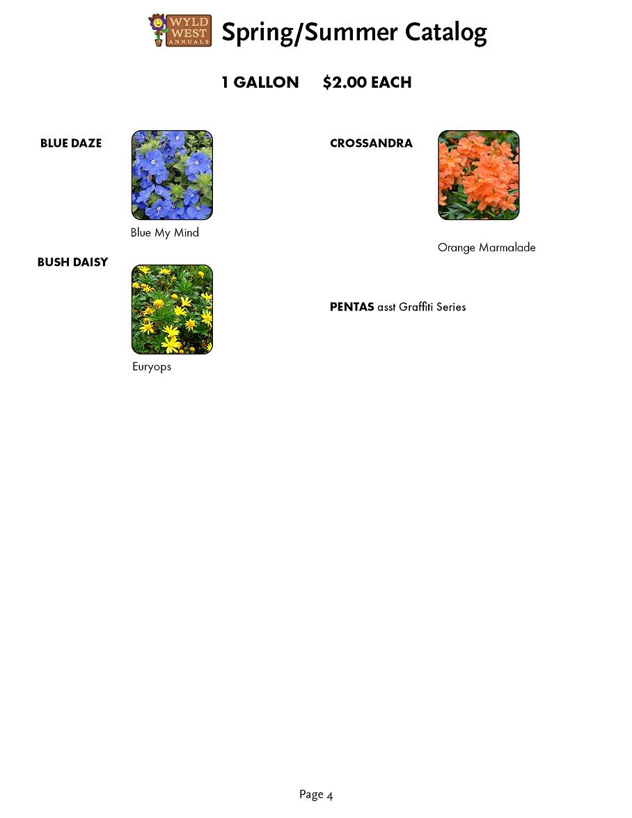 spring catalog 20205.png