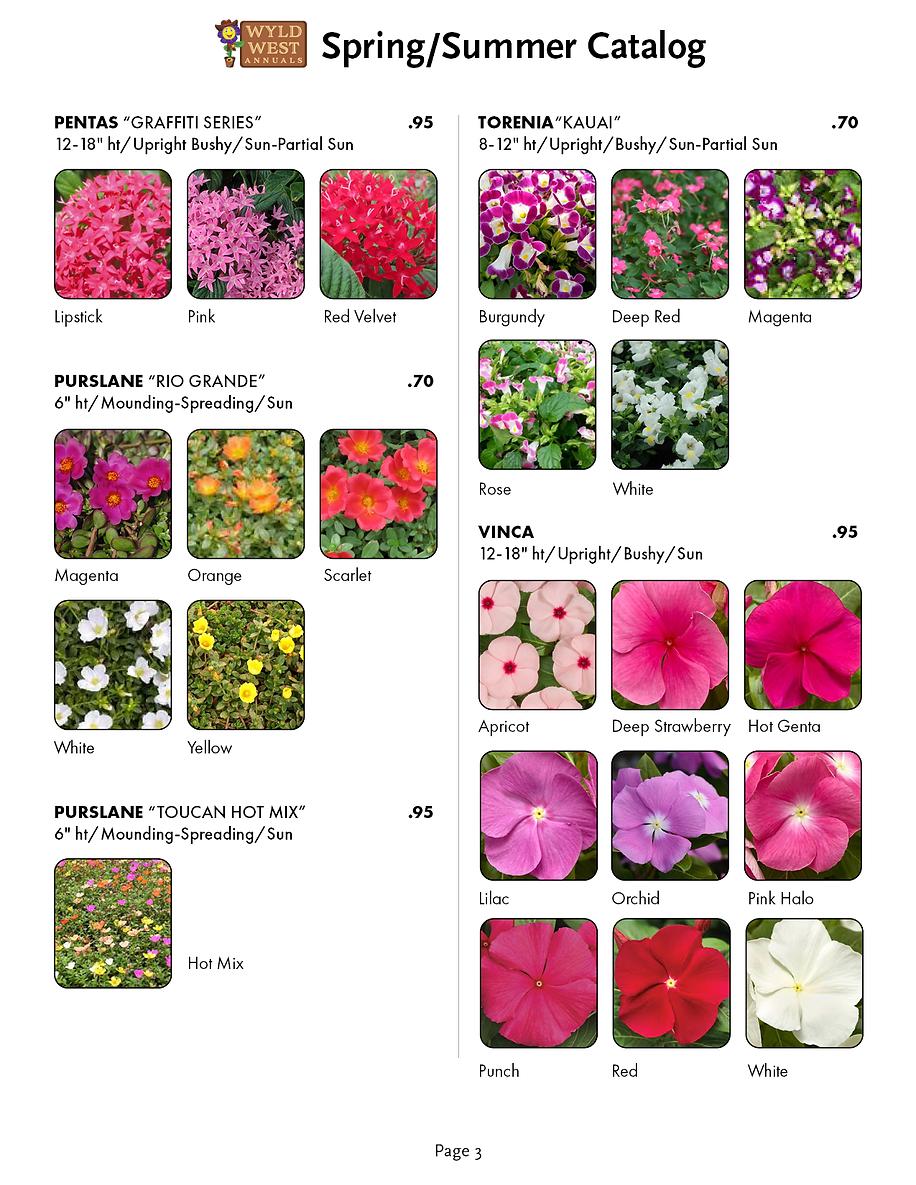 spring catalog 20204.png
