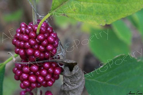 Berry Good: 2