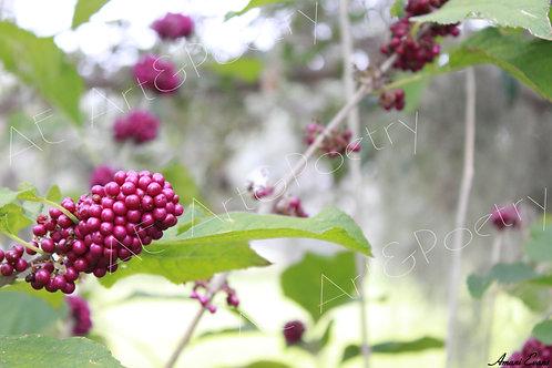 Berry Good: 1