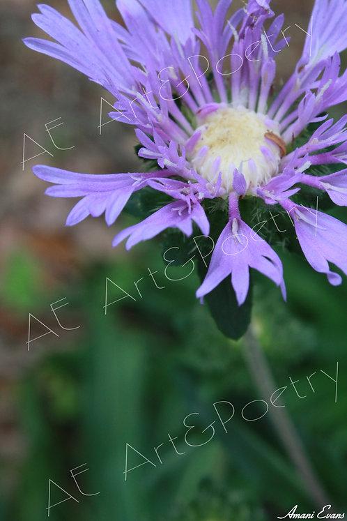 Lilac Dream: 3