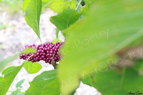 Berry Good: 5