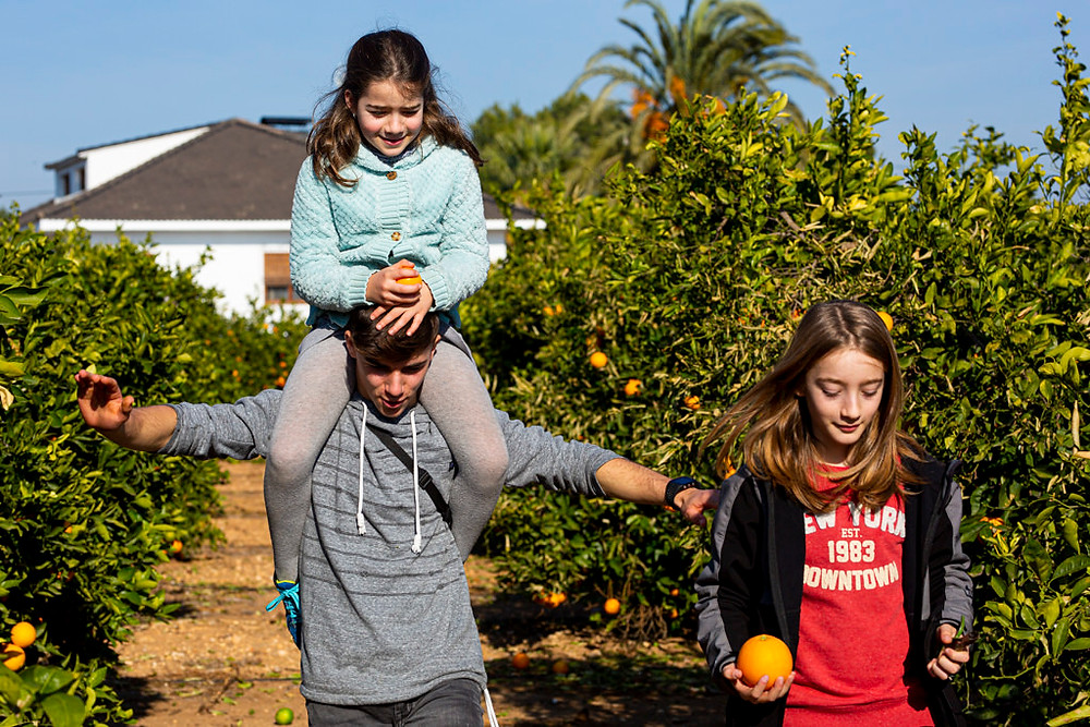 Three kids are walking through an oranges field in a sunny day