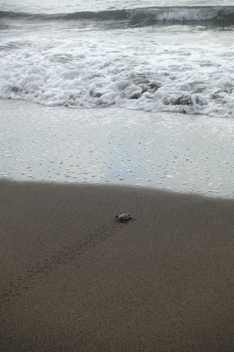 Costa Rica - Baby Turtles and Rainforest Life