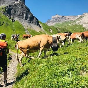 Alpine Village Hiking