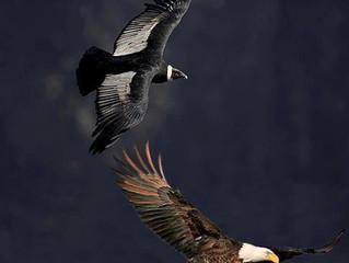 EAGLE CONDOR PROPHESY coming true