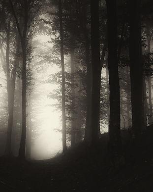 dark forest at night.jpg