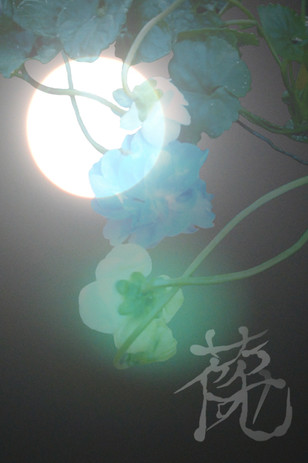 hanaemi-art6-27-28.jpg