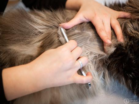 Das Wohlbefinden des Haustieres ist die Verantwortung des Tierbesitzers