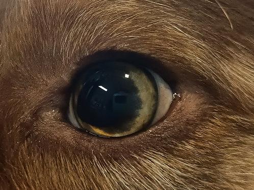 EYEness - Augenreiniger