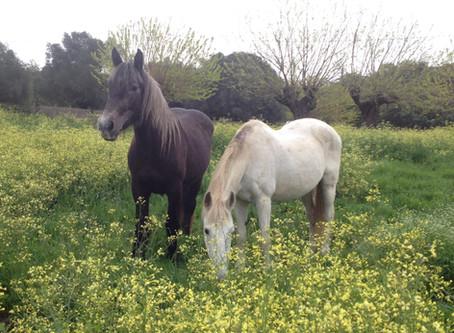 Développement de la traction animale au jardin de l'Erbiero