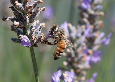 Bee Gardens