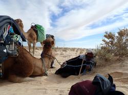 Pause dans le désert