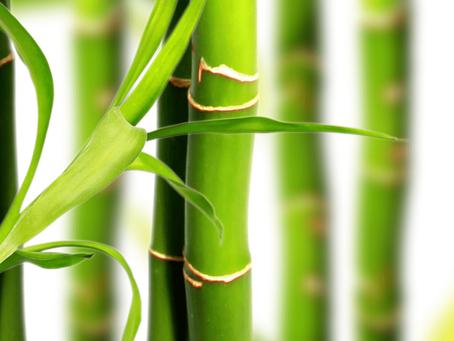 A Importante Lição do Bambu Chinês
