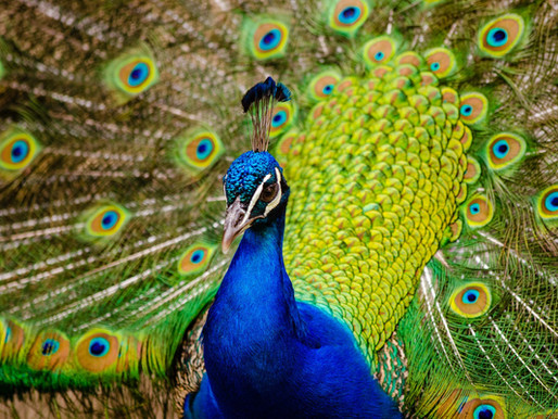 Théorie de Darwin : la sélection naturelle, mais pas que !