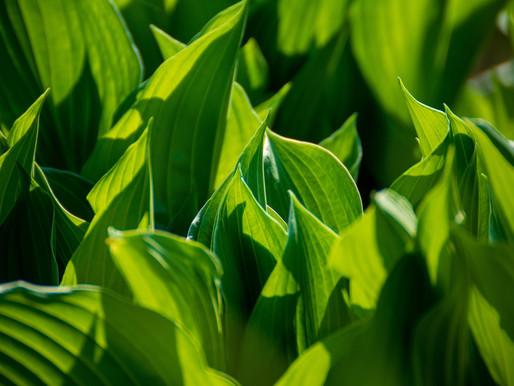 Avec la photosynthèse, faisons une fleur à la planète !
