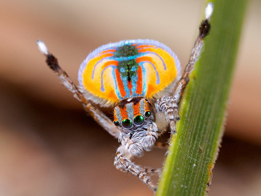 L'araignée, dans la toile de l'innovation