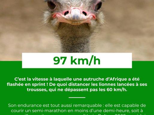 Le Saviez-Vous ? #37