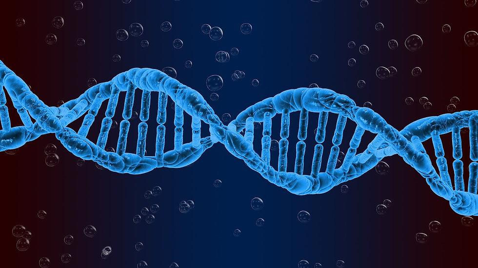 Brin_ADN.jpg