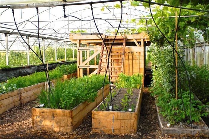 biomimétisme permaculture techniques