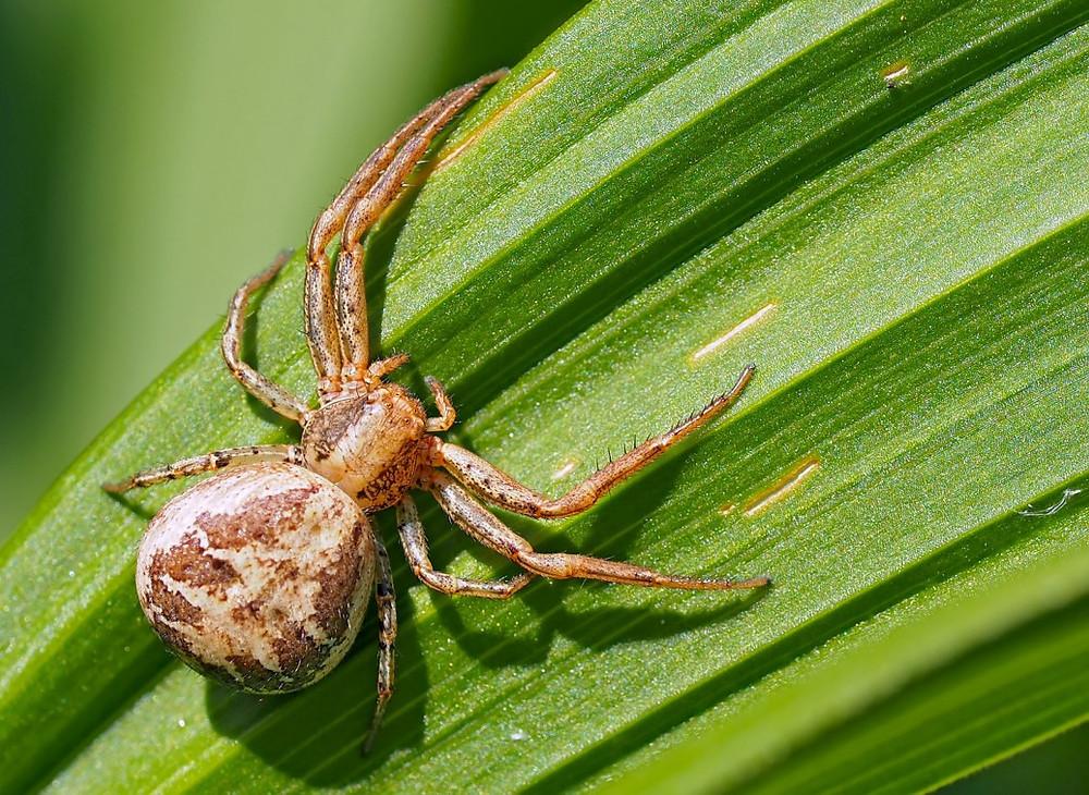 araignée biomimétisme voler