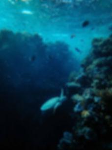 photo-of-marine-animals-underwater-34109
