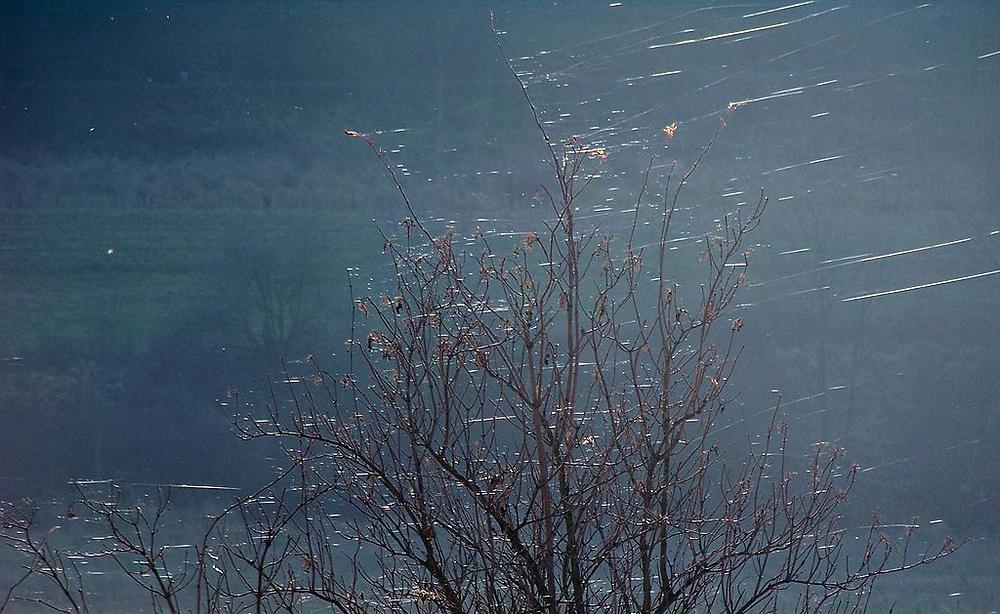 araignée biomimétisme toile Montgolfier