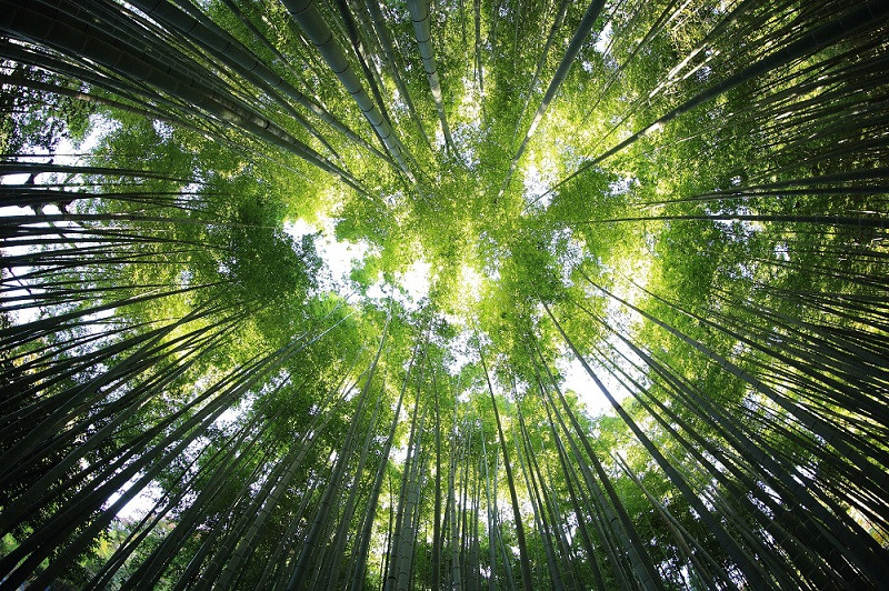 écosystème biomimétisme