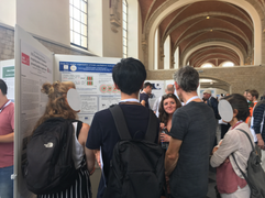 Camille's poster - ECVP 2019