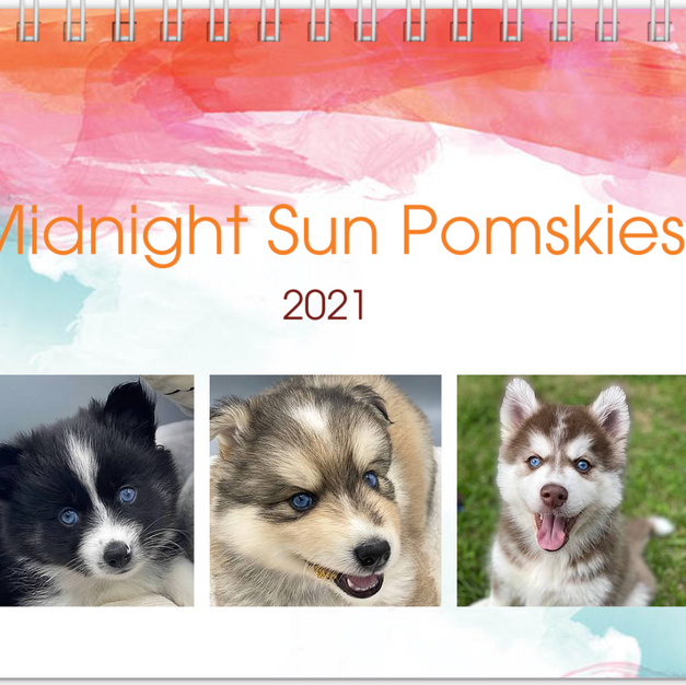 2021 Midnight Sun Pomskies Calendar