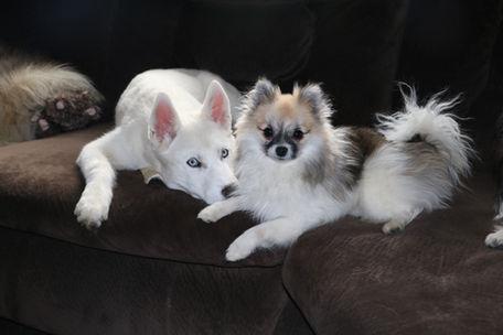 Maya and Kobuk