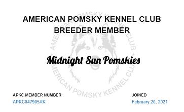 Midnight Sun Pomskies - APKC Breeder Bad