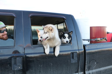 The girls love riding in the truck with thir Daddy
